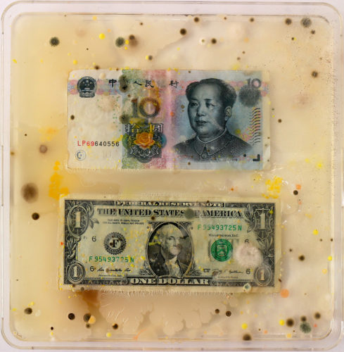 "Ken Rinaldo, ""Chinese Yuan / US Dollar (From Borderless Bacteria / Colonialist Cash)"". 2017. Agar, Currency, Bacteria. Courtesy of Ken Rinaldo"