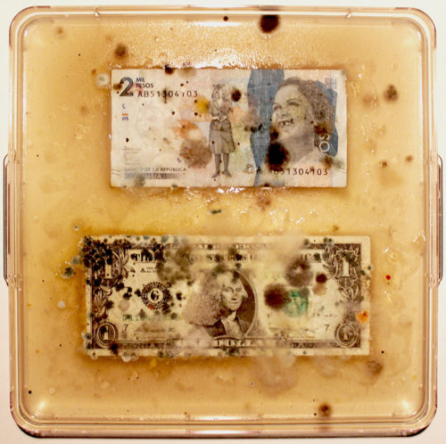 "Ken Rinaldo, ""Columbian Peso / US Dollar (From Borderless Bacteria / Colonialist Cash)"". 2017. Agar, Currency, Bacteria. Courtesy of Ken Rinaldo"