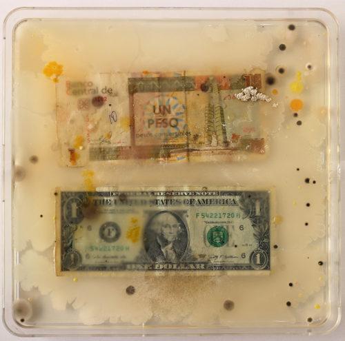 "Ken Rinaldo, ""Cuban Peso / US Dollar (From Borderless Bacteria / Colonialist Cash)"". 2017. Agar, Currency, Bacteria. Courtesy of Ken Rinaldo"