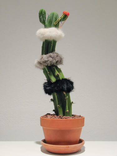 "Amy Youngs, ""Cute Parasite: Just Kidding"". 2008.live grafted cacti with feathers, rabbit fur, real and fake human hair, fake eyelashes and rubber bands. Courtesy of Amy Youngs"