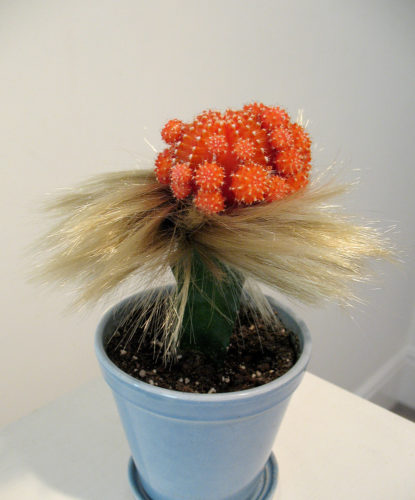 "Amy Youngs, ""Cute Parasite: Pretty Girl"". 2008.live grafted cacti with feathers, rabbit fur, real and fake human hair, fake eyelashes and rubber bands. Courtesy of Amy Youngs"